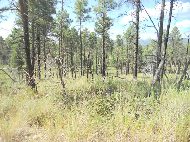 Property For Sale In Timberon Nm