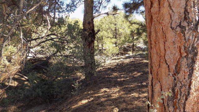 Alamosa CO K9