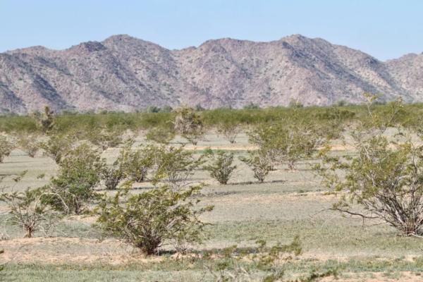 Buckeye landscape