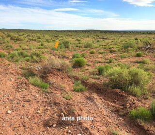 Navajo county AZ